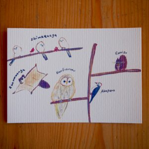 Post Card 北海道の小動物